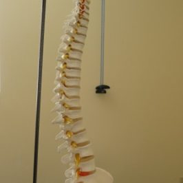 Back to Basics with Lower Back Pain