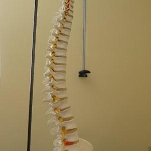 lower back skeleton